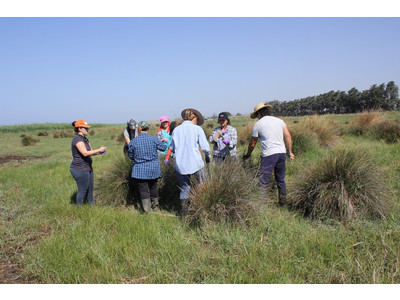 Locals collecting sedges and rushes as part of the project - July 2016