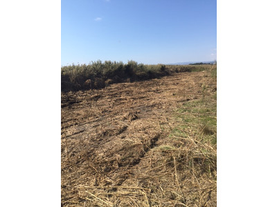 Clearing reeds from specific areas - November 2015